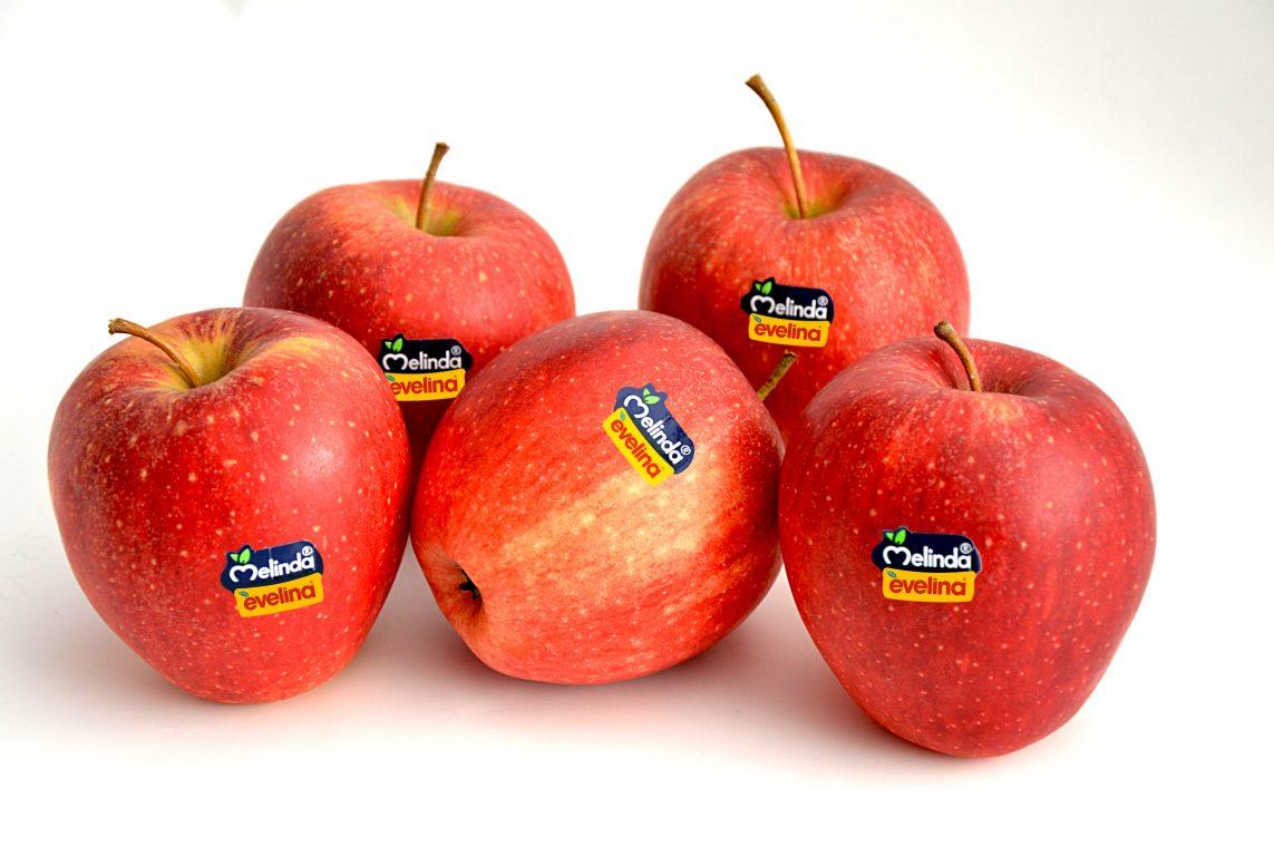 Melinda vendita mela Evelina - press room Soluzione Group
